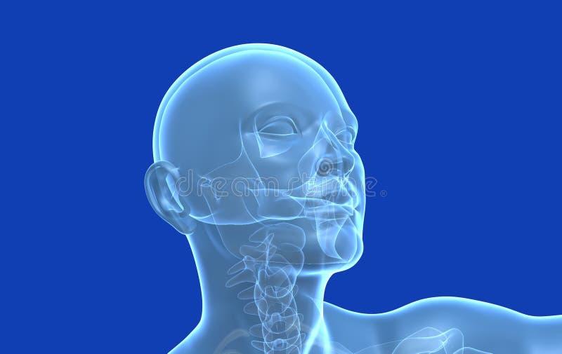 Medyczna ilustracji 3d ludzka głowa, stylizowany, błękitny tło, royalty ilustracja