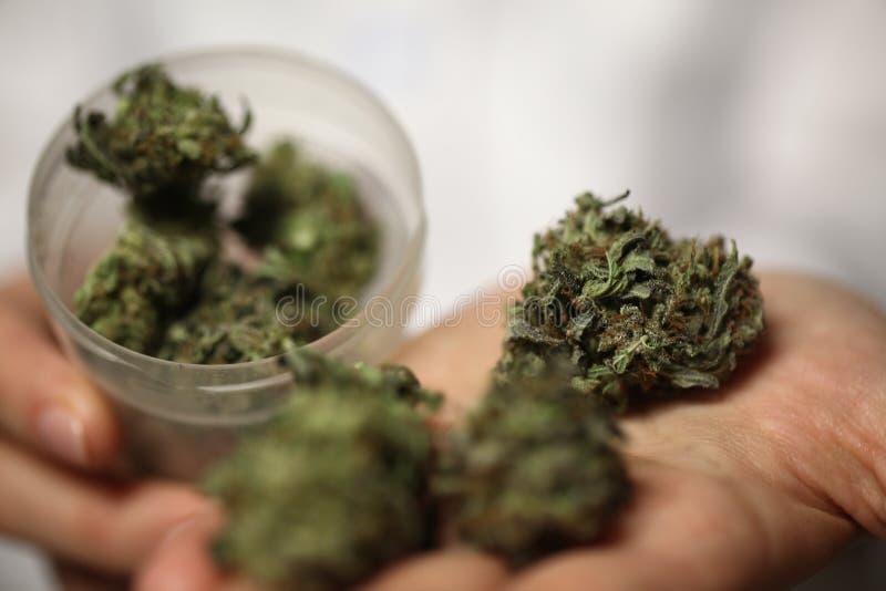 Medyczna marihuana w ręce lekarka marihuany alternatywna medycyna zdjęcia stock