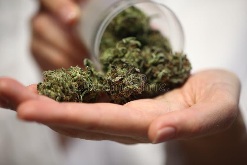 Medyczna marihuana w ręce lekarka marihuany alternatywna medycyna obraz stock