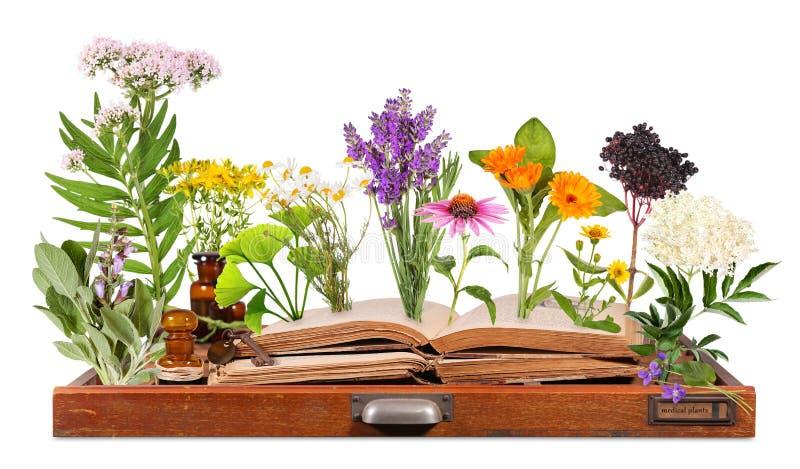 Medyczne rośliny z starymi książkami i listową skrzynką fotografia royalty free