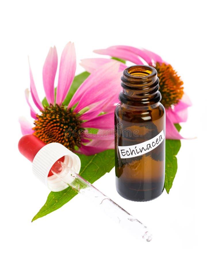 Medyczne rośliny: Coneflower Echinacea purpurea buteleczki z tincture obrazy stock