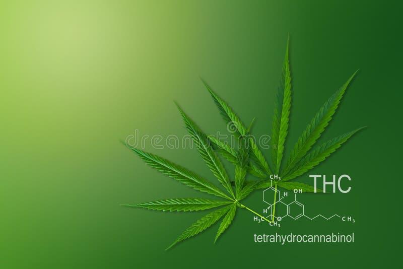 Medyczny chemicznej formuły konopie THC, Cząsteczkowej struktury marihuany tetrahydrocannabinol ilustracji