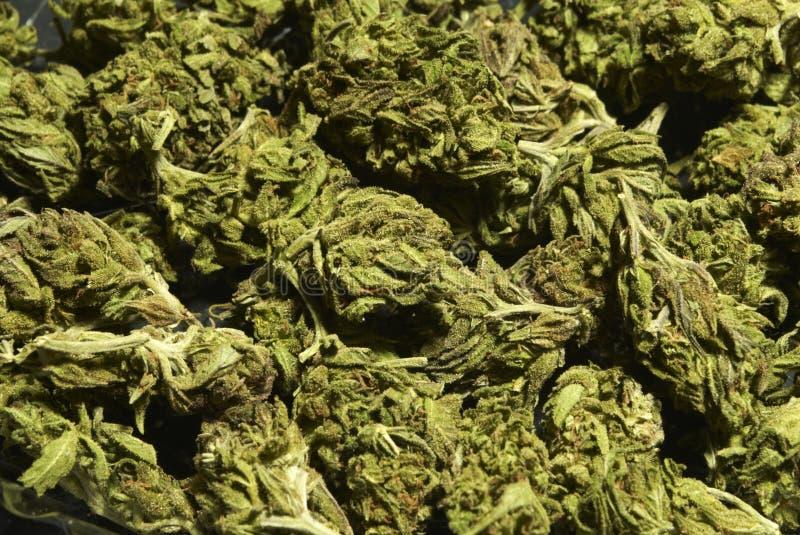 Medyczny marihuany tło obraz stock