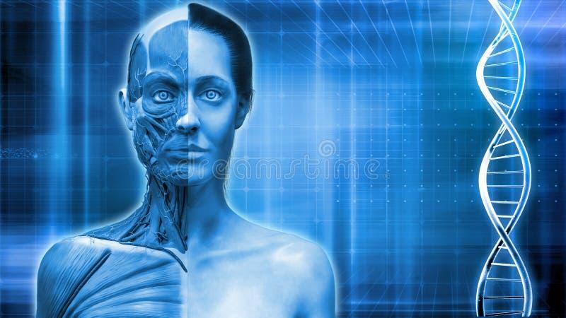 Medyczny tło ludzka anatomia ilustracja wektor