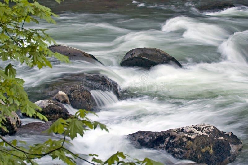 Download Medytacja zdjęcie stock. Obraz złożonej z oregon, overcast - 131932