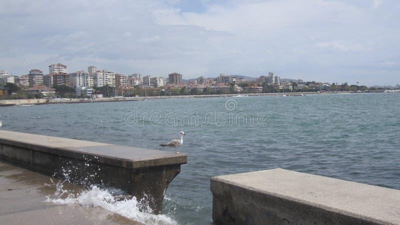Medytacyjny seagull zdjęcie stock