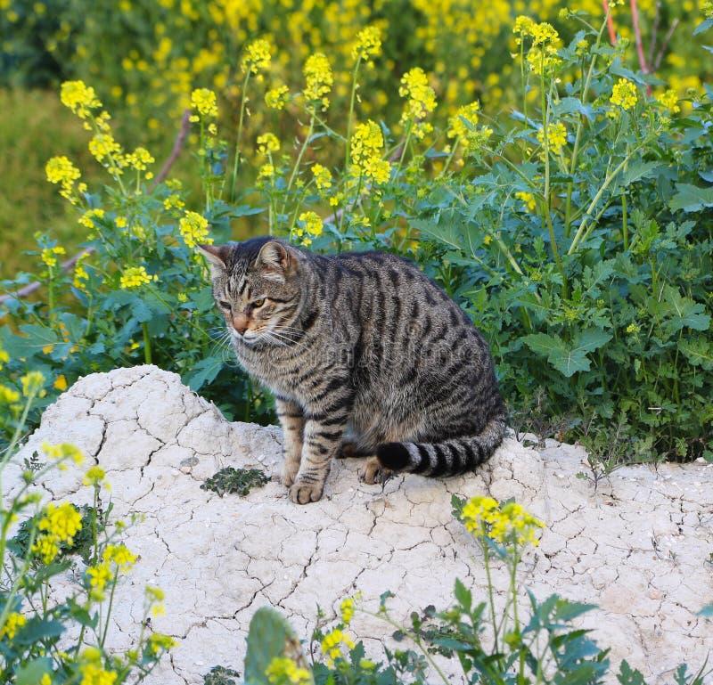 Medytacyjny zdziczały kot zdjęcia stock