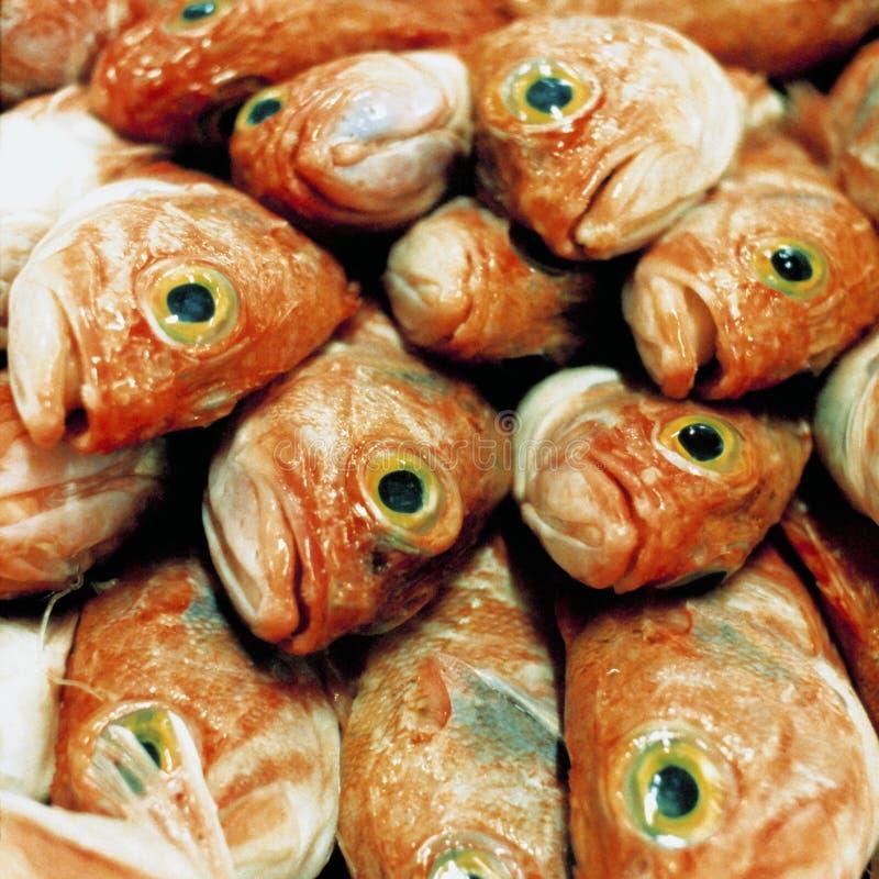 Meeräsche lizenzfreie stockfotos