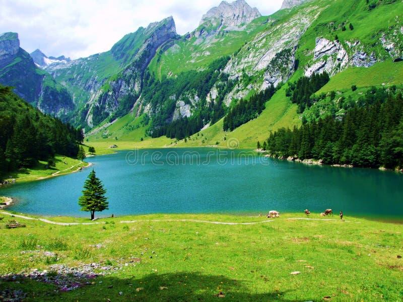 meer, berg, landschap, water, aard, bergen, hemel, bezinning, blauw, bos, de zomer, groene rivier, wolken, reis, mening, RT stock foto
