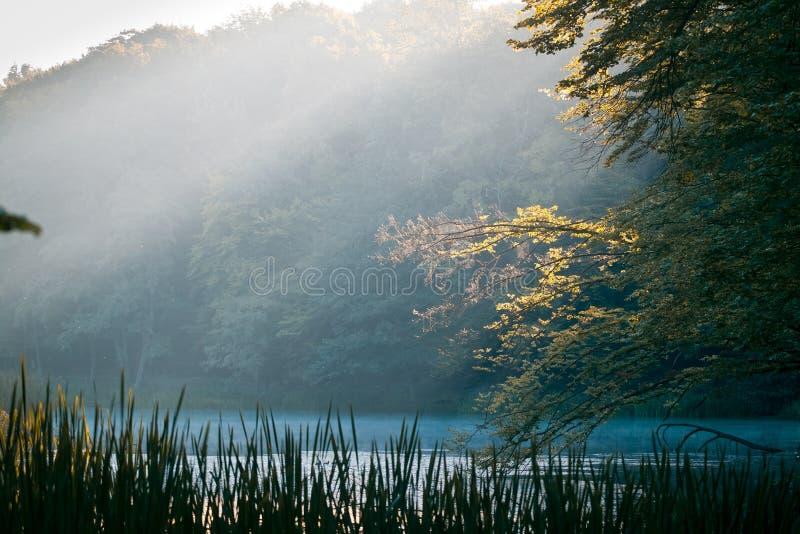 Meer in bos, mistige ochtend mooie zonsopgang, de zomer, gele zonstralen op boombladeren, nog waterspiegel, aardpanorama royalty-vrije stock afbeelding