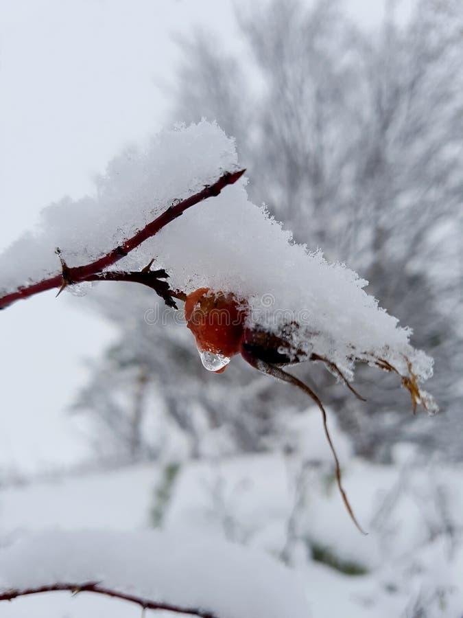 Meer brier de winter Scheuren van de vroegere zomer royalty-vrije stock afbeeldingen