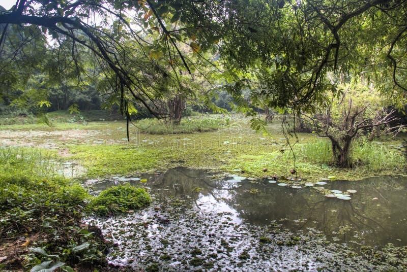 Meer dichtbij de rots van de Leeuw in Sigiriya, Sri Lanka stock foto's