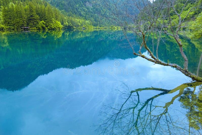 Meer in diep bos stock foto