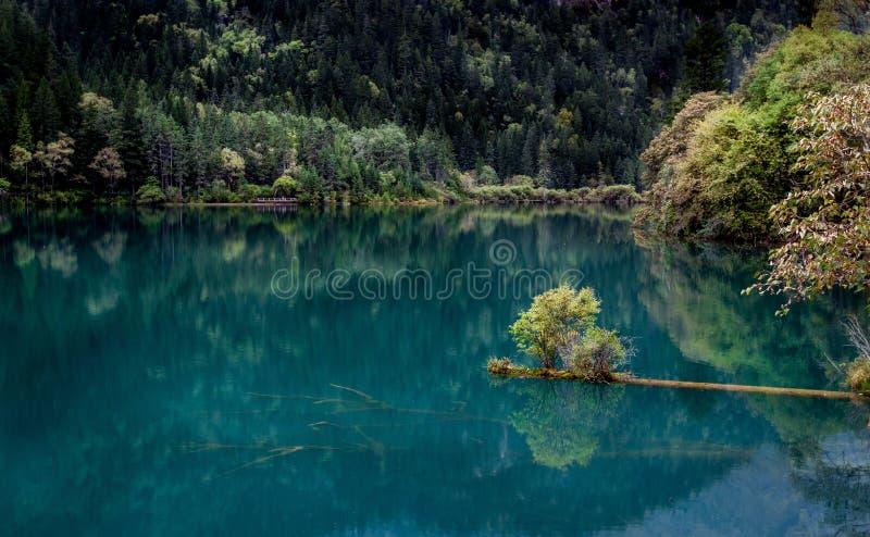 Meer en Bomen in Jiuzhaigou-Vallei, Sichuan, China royalty-vrije stock afbeeldingen