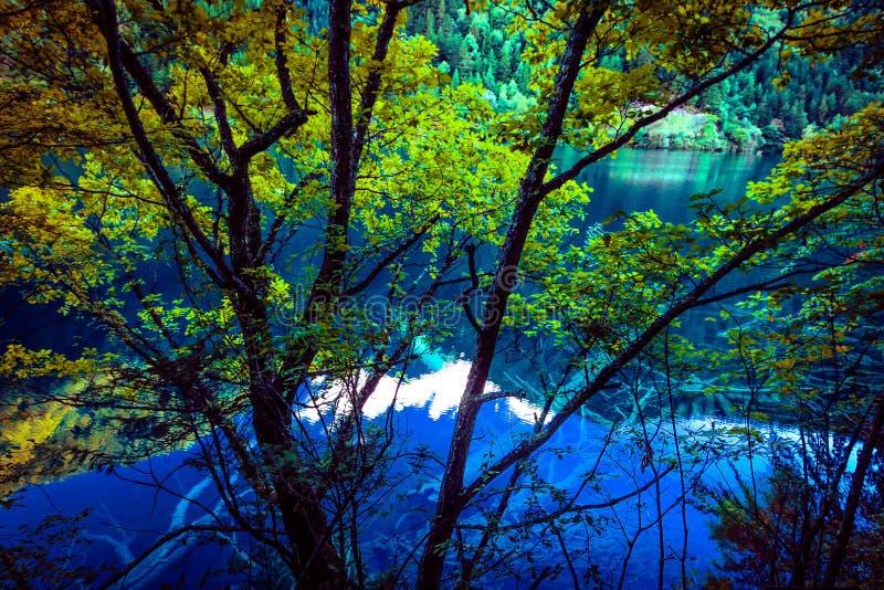 Meer en Bomen in Jiuzhaigou-Vallei, Sichuan, China royalty-vrije stock foto