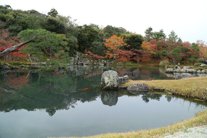 Meer en boom in de herfst in Japan royalty-vrije stock foto