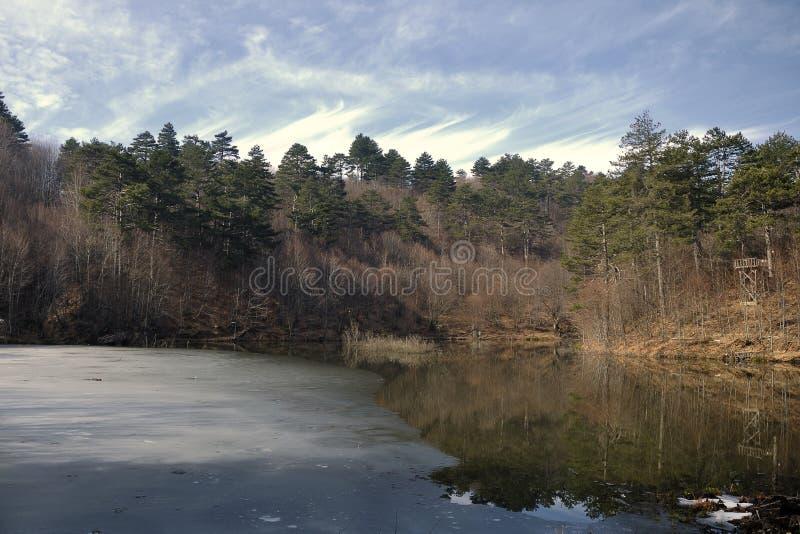 Meer en bos stock afbeelding