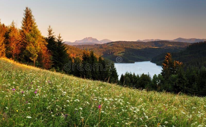 Meer en bos - Nova Bystrica-dam stock afbeeldingen