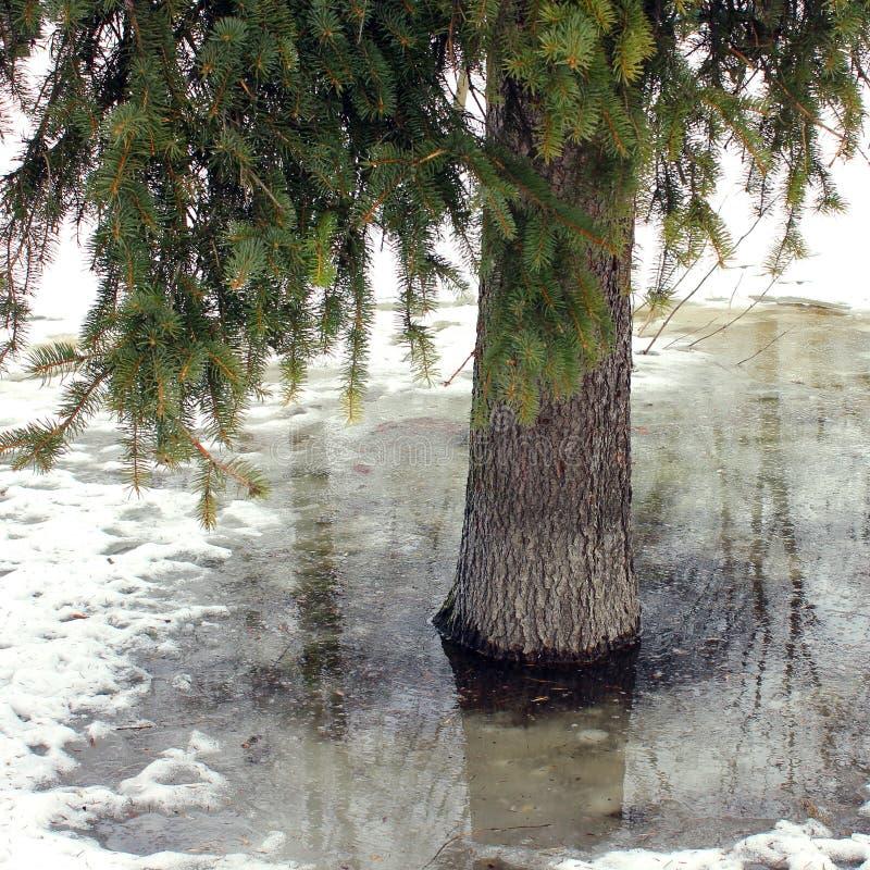Meer in het de winterpark royalty-vrije stock afbeelding