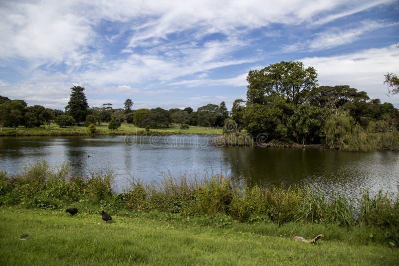 Meer in Honderdjarig park stock fotografie