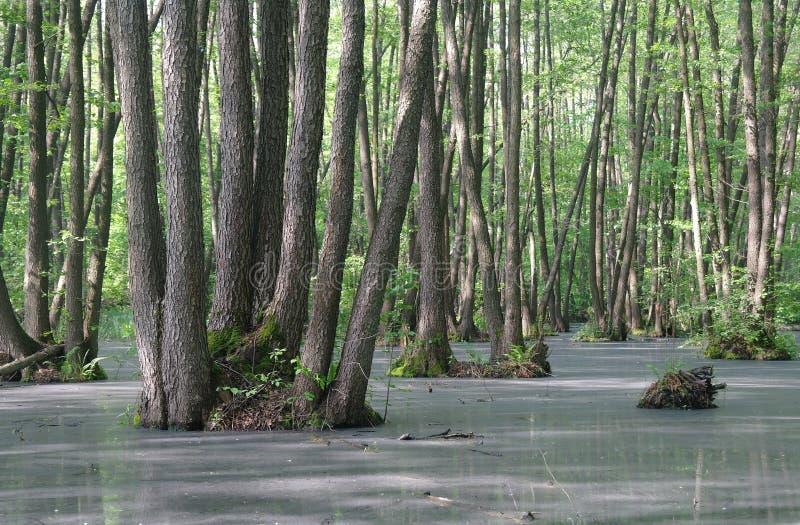 Meer in houten groen en bomen royalty-vrije stock afbeeldingen