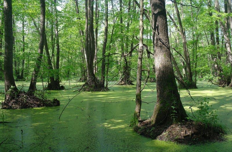 Meer in houten groen en bomen royalty-vrije stock foto