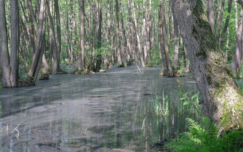 Meer in houten groen en bomen stock fotografie