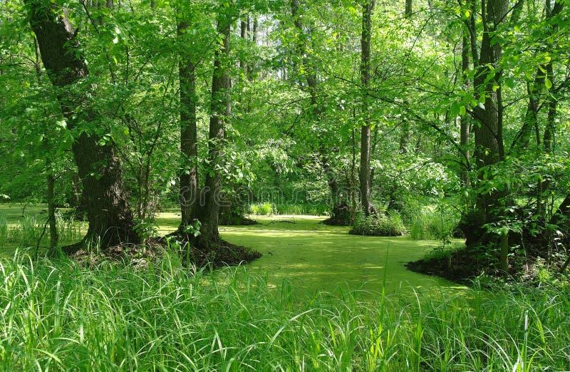 Meer in houten groen en bomen royalty-vrije stock fotografie