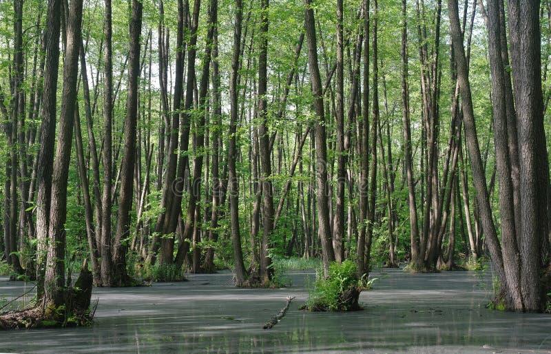 Meer in houten groen en bomen stock afbeelding