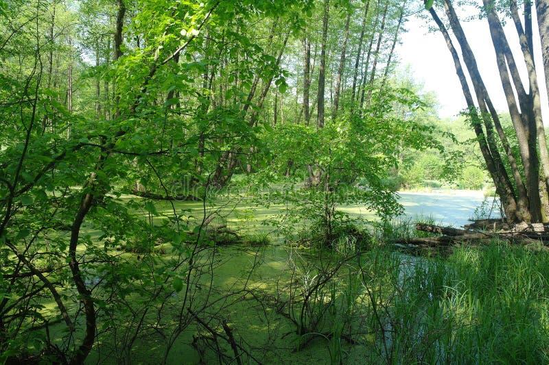 Meer in houten groen en bomen stock foto's