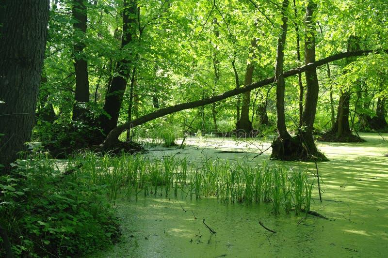 Meer in houten groen en bomen royalty-vrije stock afbeelding