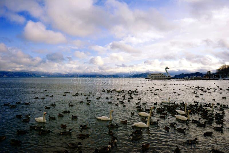 Meer Inawashiro fulls van zwaan en wilde eenden stock foto
