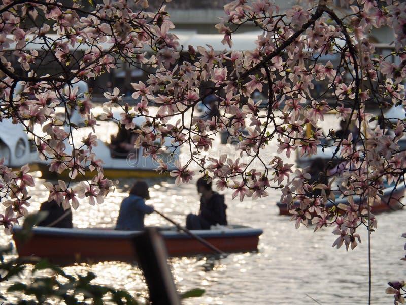 Meer in Inokashira-Park met Boten en Magnolia's royalty-vrije stock afbeelding