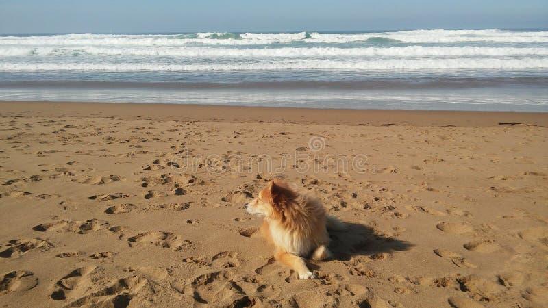 Meer kommt zu readhear stockbild