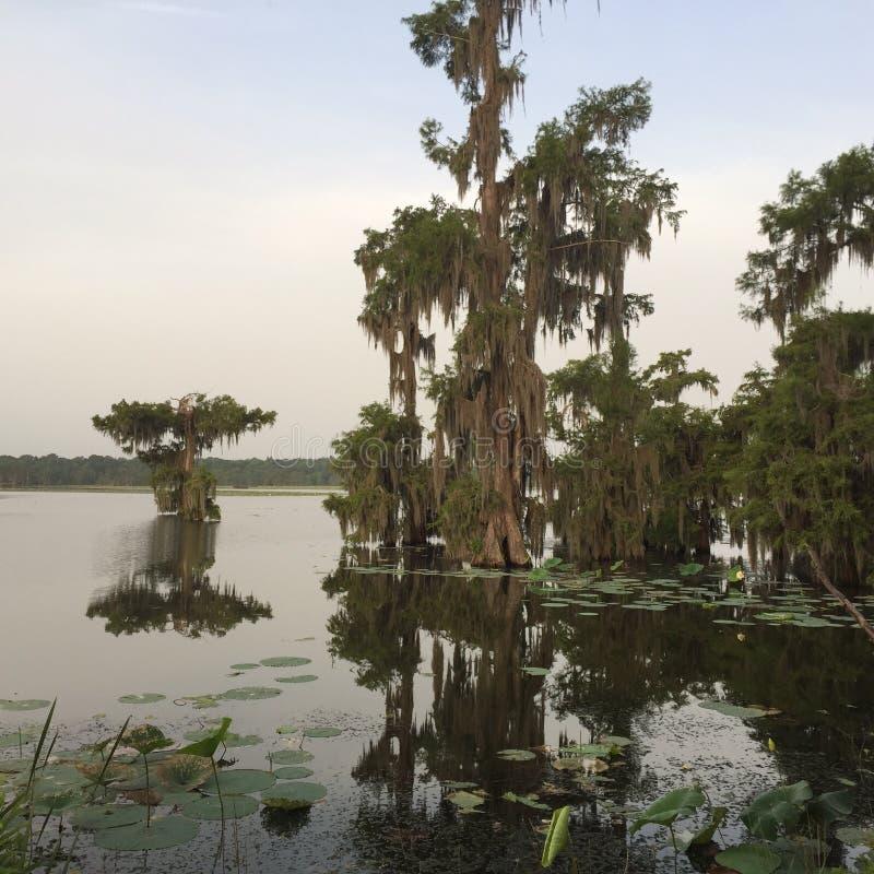 Meer Martin Cypress Island, de Aarddomein van Louisiane royalty-vrije stock fotografie