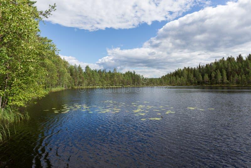 Meer met rotsachtige kust Blauwe hemel Op de pijnboom Aard van Finland royalty-vrije stock fotografie