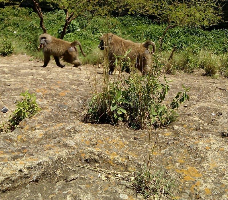 Meer Nakuru National Park Kenya royalty-vrije stock afbeeldingen