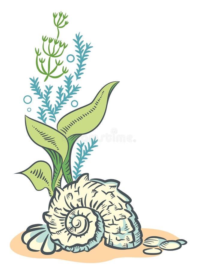 Meer schält gezeichnete Skizzenart Illustration lokalisiertes O der Algen Hand vektor abbildung
