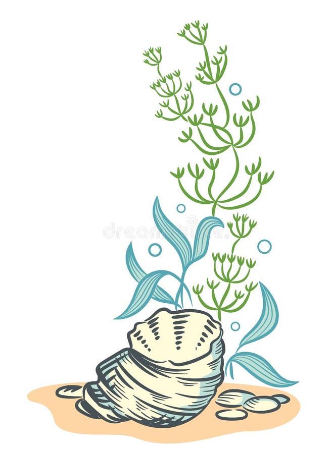 Meer schält gezeichnete Skizzenart Illustration lokalisiertes O der Algen Hand lizenzfreie abbildung