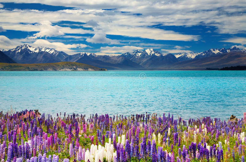 Meer Tekapo, Nieuw Zeeland