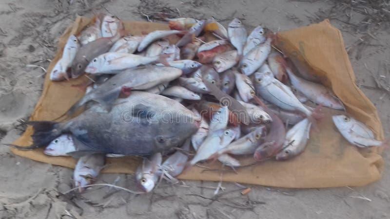 Meer und Fische stockfotos