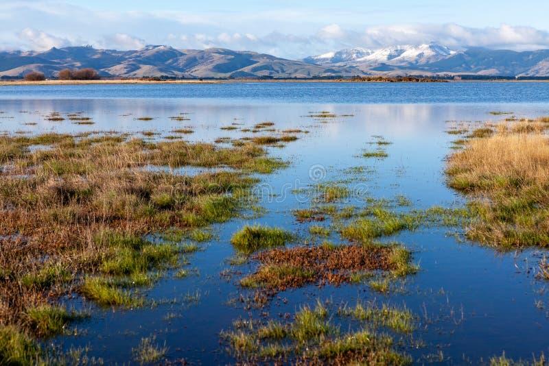 Meer van Ellesmere Wetlands, Nieuw-Zeeland stock afbeeldingen
