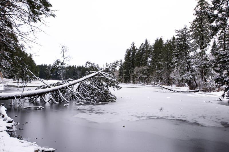 Meer van landschaps het de winter bevroren Lakamas met gevallen boom behandelde wi stock afbeelding