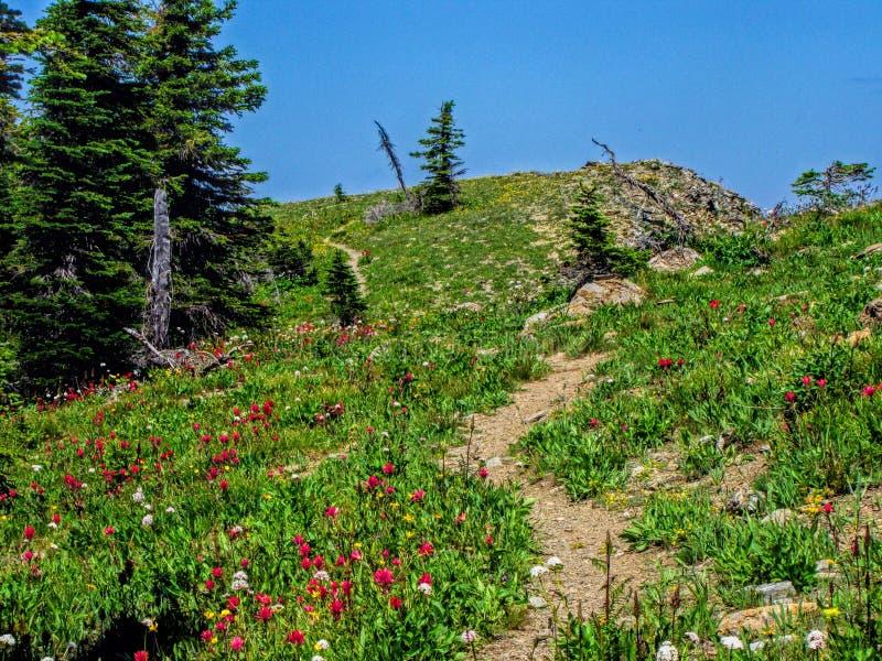 Meerberg Wildflowers stock afbeelding