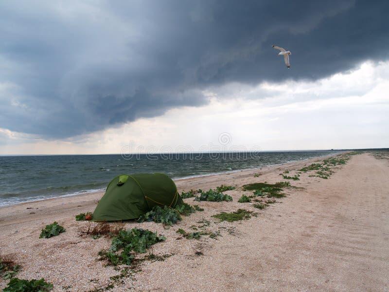Meerblick mit grünem Zelt und Seemöwe stockfotos
