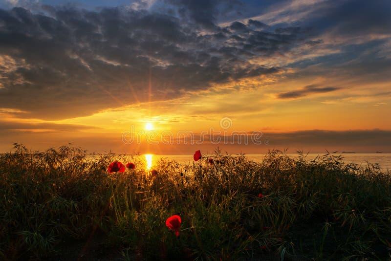 Meerblick mit Mohnblumen/ausgezeichneter Sonnenaufgangansicht mit schönen Mohnblumen auf dem Strand nahe Burgas, Bulgarien stockfotografie