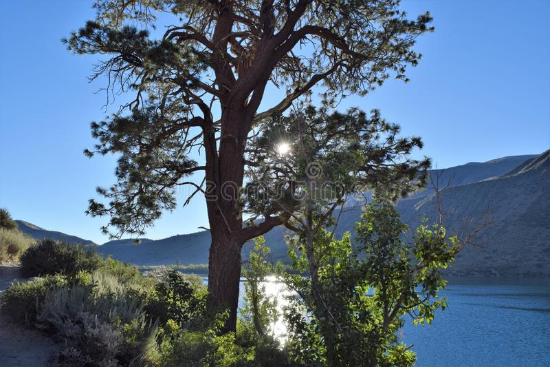 Meerboom tegen Bergachtergrond royalty-vrije stock fotografie