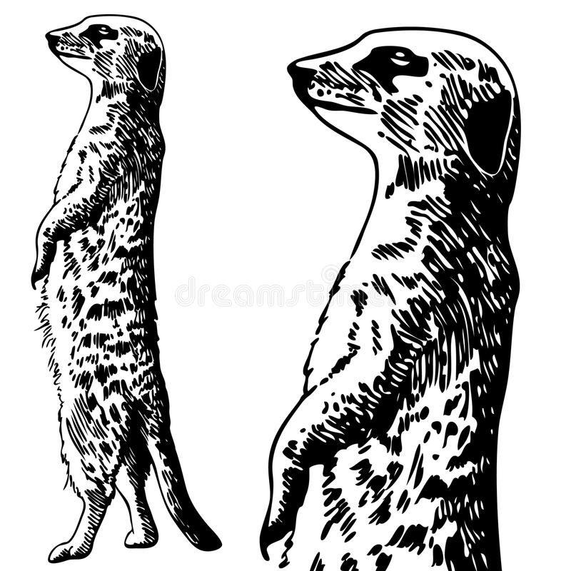 Meercat Sketch - black and white stock illustration