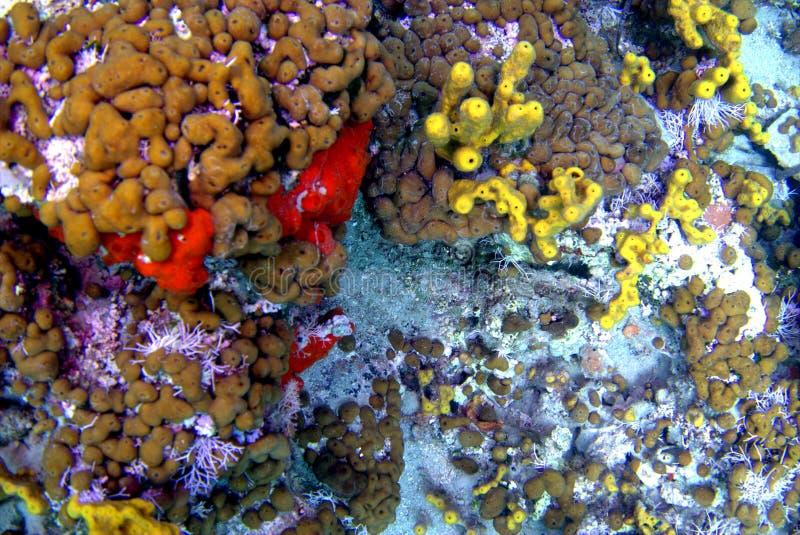 Meeresflora und -fauna stockfoto