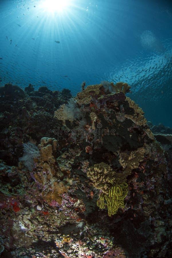 Meeresflora und -fauna auf der Wand mit blauem Hintergrund stockfotos